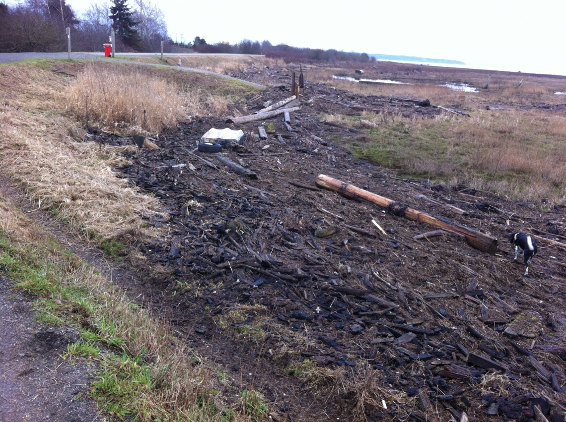 Boundary Bay Log Debris 2015-01-15.jpg